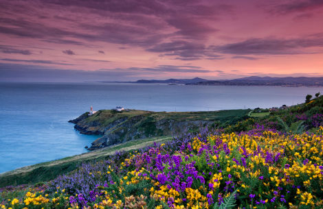 Klippenspaziergang in Howth - © Tourism Ireland