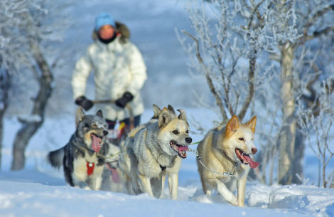 Norwegen Huskys im Winter - ©Travel-Traders
