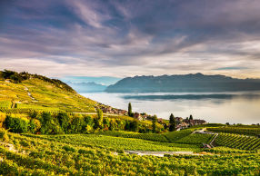 Lavaux am Genfer See - © MaudeRion